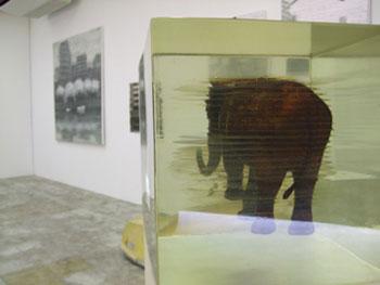 「ZAIM GALLERY」での笛田亜希の展示。ゾウのはなこさんのミニチュアを樹脂のキューブに封じ込めた作品。