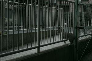 秋山直子展「ZOO」(「黄金町バザール2012」公式参加作品)より  © Naoko Akiyama