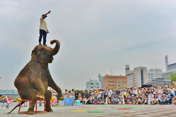 象の鼻5周年象